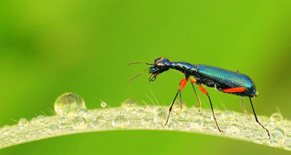 Curso Fotografía de naturaleza. Insectos. (Con cámara compacta).