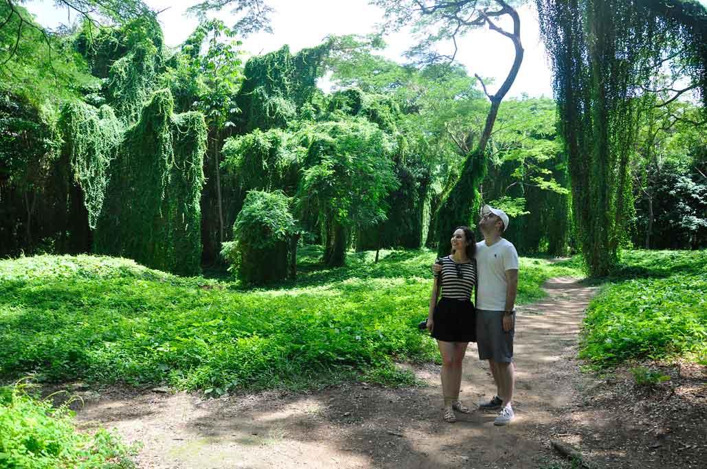 Bosque de la Habana. Isla Josefina.